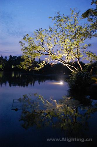 西湖树木高清风景竖版